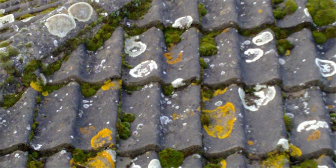roof mold and lichen